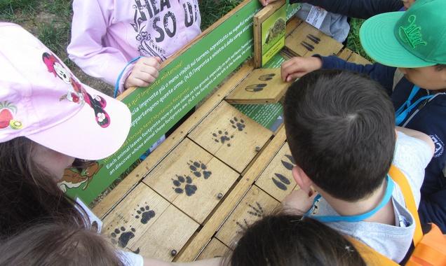 Uno dei giochi didattici presenti in BoscAsolo